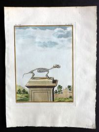 Buffon 1768 Antique Hand Col Print. Rodent Skeleton 7-30